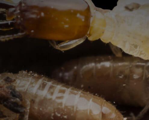 Wcao Texas Termite Control