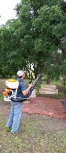 mosquitos_pest_control_waco_tx_ipest_solutions