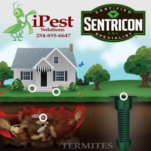 pest_control_waco_termites_ipest_solutions