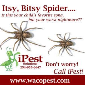 waco_texas_pest_control_spider_control