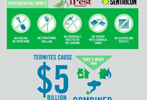 termite-control-ipest-waco