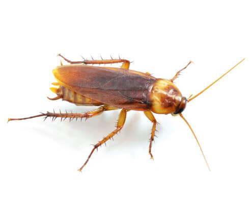 Waco Roach Control