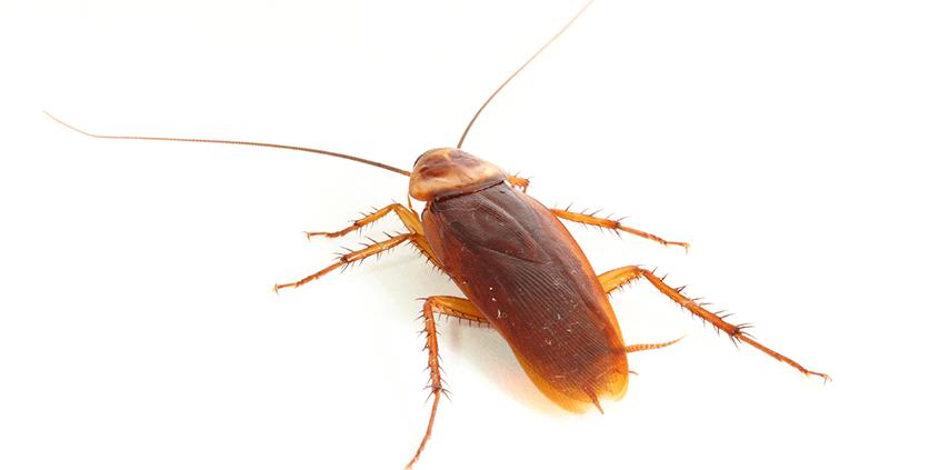 Cockroach Control Waco