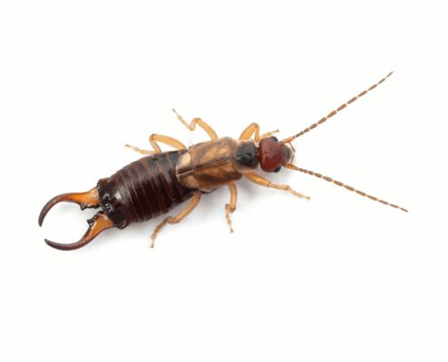 Waco Pest Control