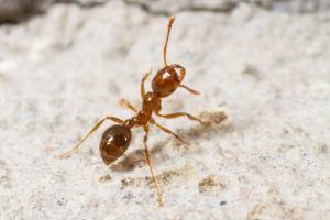 Waco Fire Ant Control