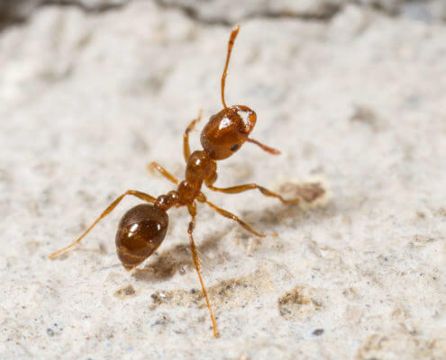 Waco Fire Ant Control