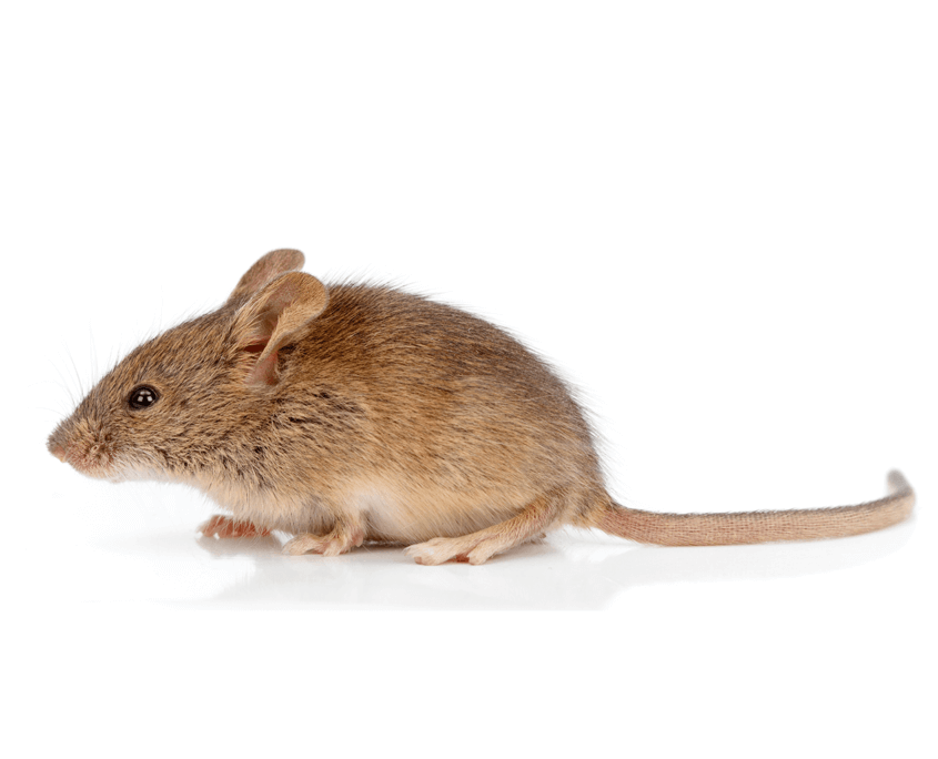 Waco Mouse Control
