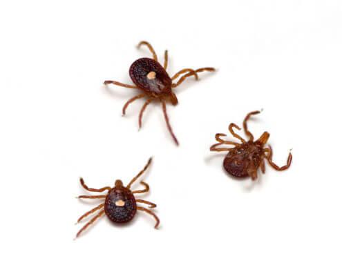 Waco Flea & Tick Control