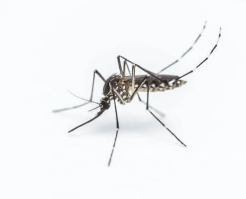Waco Mosquito Control