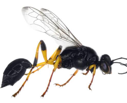 Waco Wasp Control