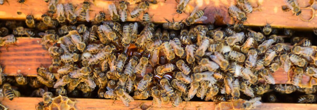 Waco Texas Bee Removal