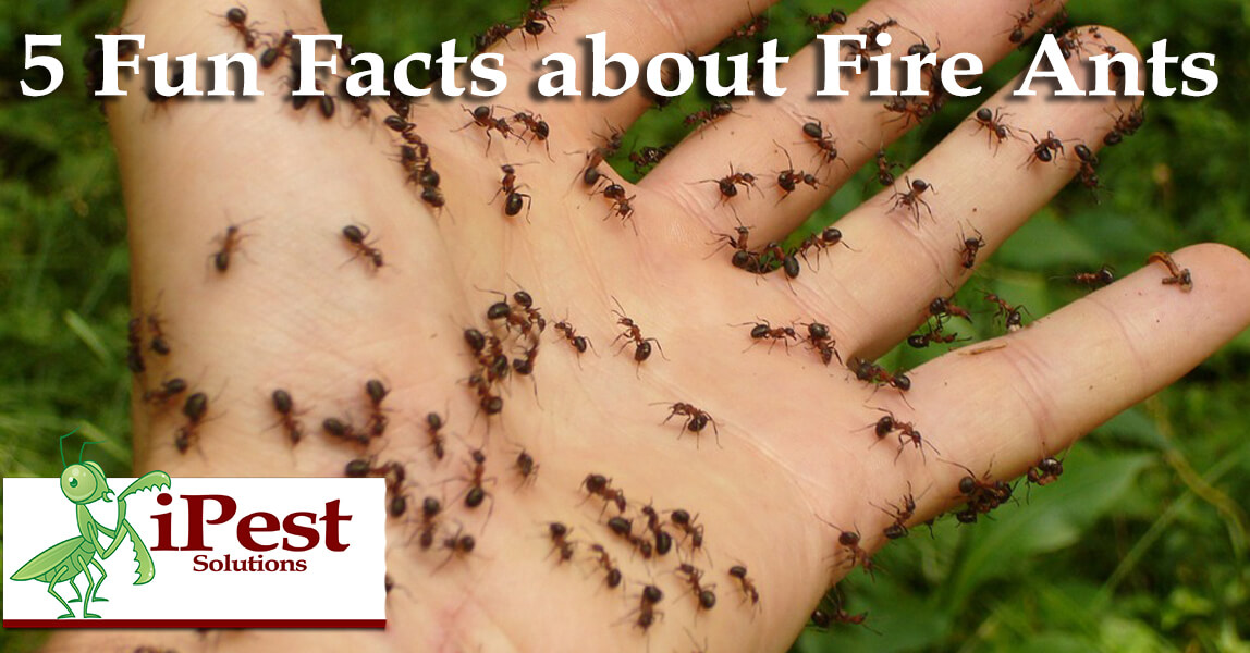Ants pictures facts 1
