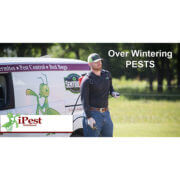 over-wintering-pests-image