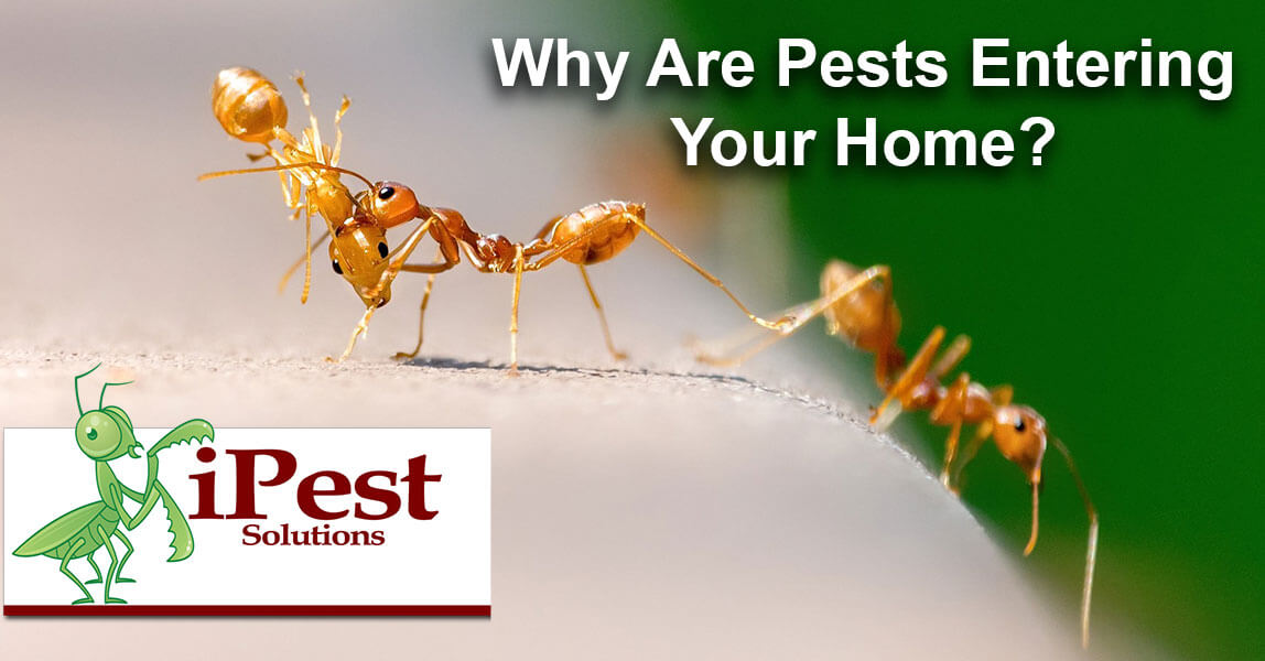 why-are-pests-entering-your-home