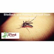 waco_texas_pest_control_mosquito