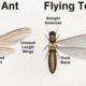 ant_vs_termite