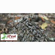 waco_termite_control_facebook