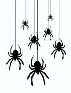 Waco Spider Control