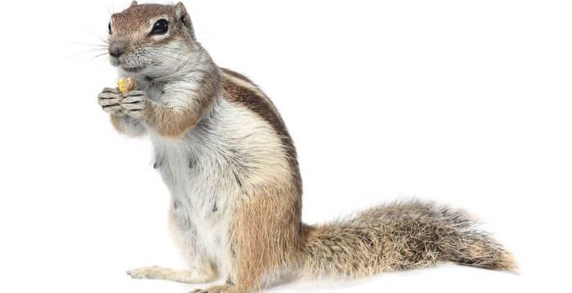 Waco Squirrel Control